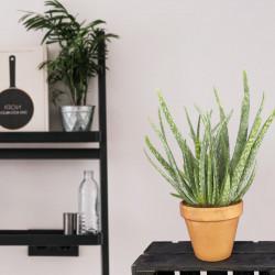Plante verte pour la rentrée