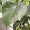 Plante intérieur, livraison 4h en France