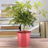 Plante verte pour le bureau