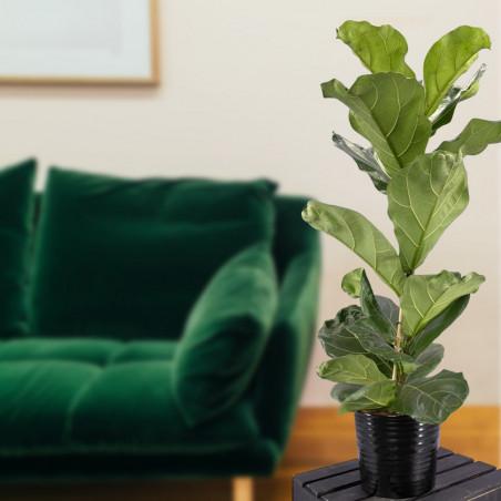 Plante verte intérieur pour septembre