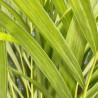 Plante verte, livraison 4h en France