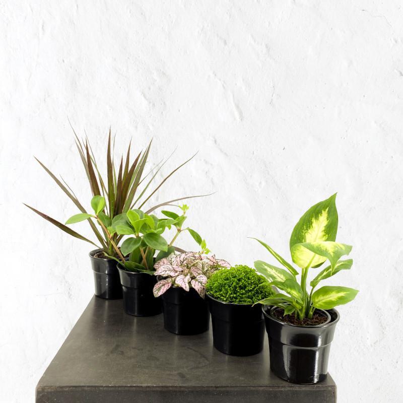 Mini Plantes vertes